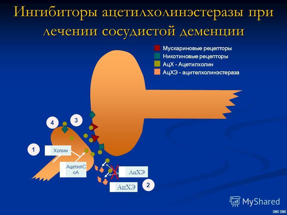 Ингибиторы ацетилхолинэстеразы при лечении сосудистой деменции Мускариновые рецепторы Никотиновые рецепторы АцХ - Ацетилхолин АцХЭ - ацителхолинэстераза АцХЭ Холин АцХЭ АцетилC oA 3 2 1 4