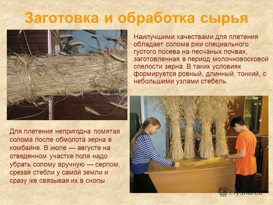 Заготовка и обработка сырья Наилучшими качествами для плетения обладает солома ржи специального густого посева на песчаных почвах, заготовленная в период молочновосковой спелости зерна. В таких условиях формируется ровный, длинный, тонкий, с небольши