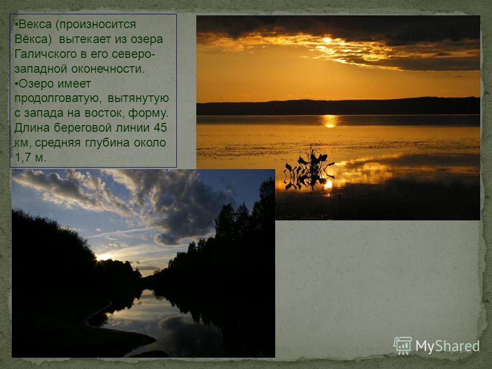 Векса (произносится Вёкса) вытекает из озера Галичского в его северо- западной оконечности. Озеро имеет продолговатую, вытянутую с запада на восток, форму. Длина береговой линии 45 км, средняя глубина около 1,7 м.