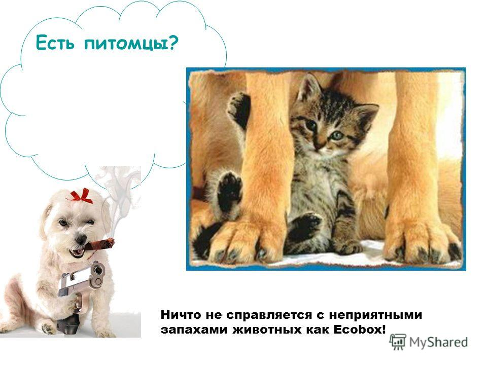 Ничто не справляется с неприятными запахами животных как Ecobox! Есть питомцы?