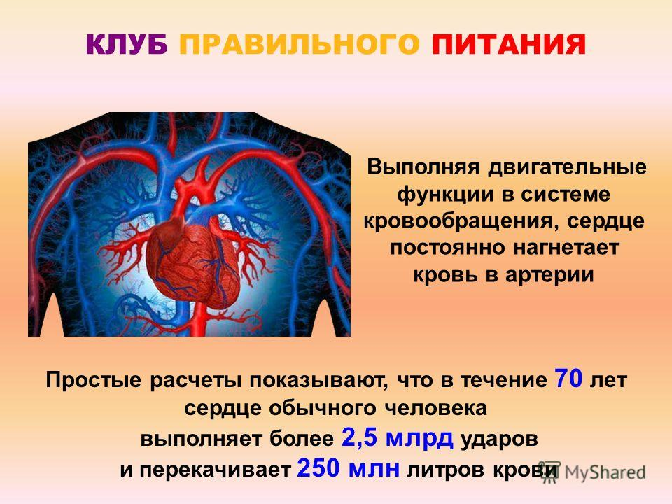 КЛУБ ПРАВИЛЬНОГО ПИТАНИЯ Простые расчеты показывают, что в течение 70 лет сердце обычного человека выполняет более 2,5 млрд ударов и перекачивает 250 млн литров крови Выполняя двигательные функции в системе кровообращения, сердце постоянно нагнетает