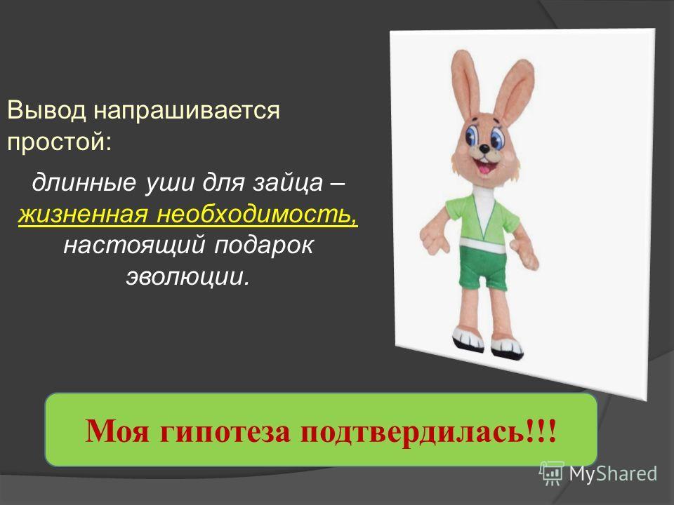 Вывод напрашивается простой: длинные уши для зайца – жизненная необходимость, настоящий подарок эволюции. Моя гипотеза подтвердилась!!!