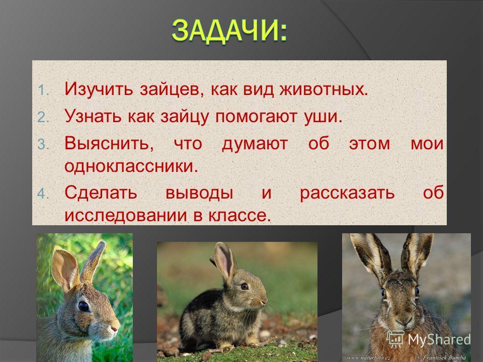 1. Изучить зайцев, как вид животных. 2. Узнать как зайцу помогают уши. 3. Выяснить, что думают об этом мои одноклассники. 4. Сделать выводы и рассказать об исследовании в классе.