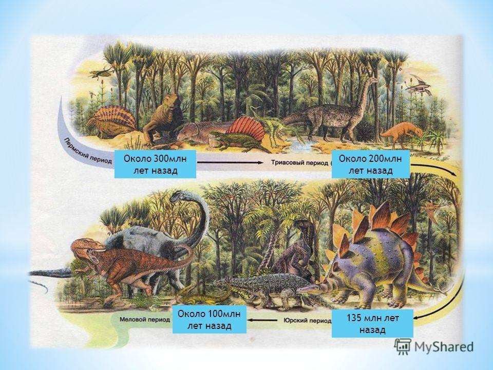 Около 300млн лет назад Около 200млн лет назад 135 млн лет назад Около 100млн лет назад