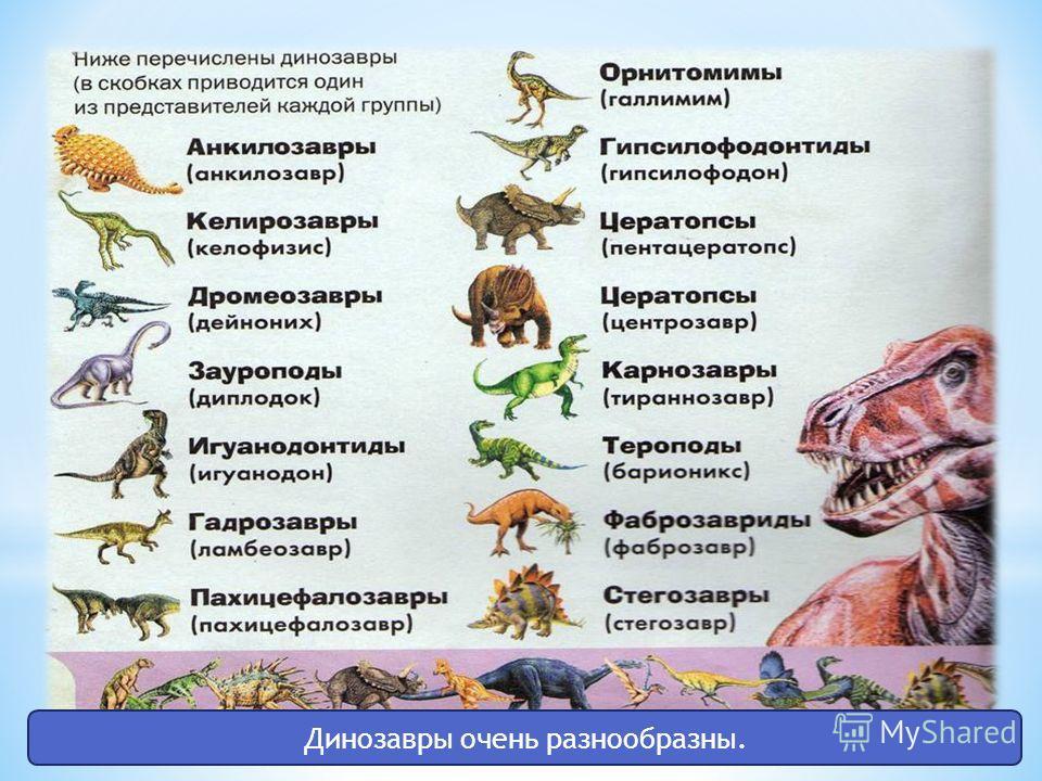 Динозавры очень разнообразны.