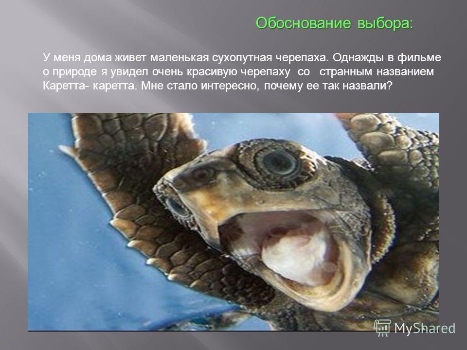 У меня дома живет маленькая сухопутная черепаха. Однажды в фильме о природе я увидел очень красивую черепаху со странным названием Каретта- каретта. Мне стало интересно, почему ее так назвали? Обоснование выбора: