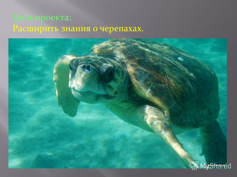 Цель проекта: Расширить знания о черепахах.
