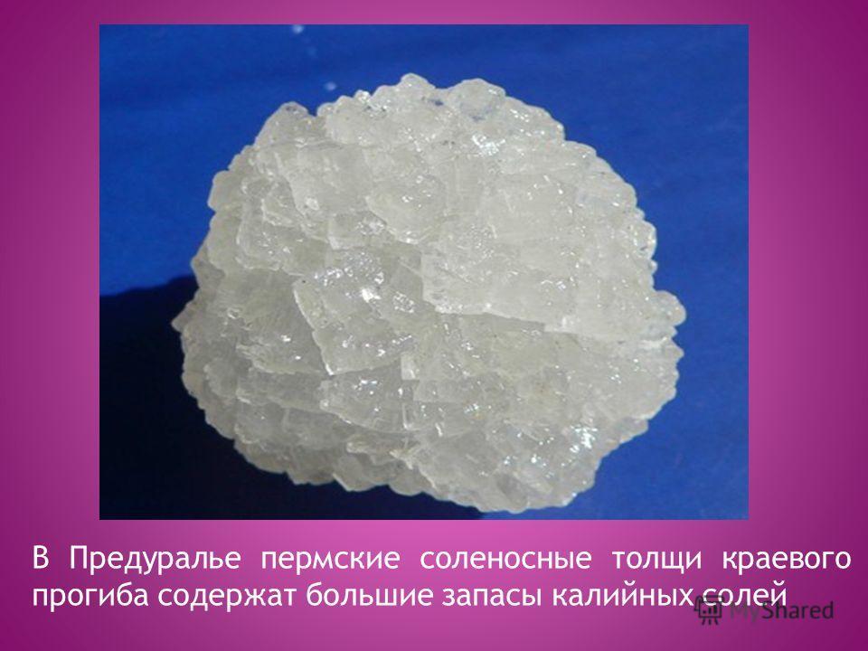 В Предуралье пермские соленосные толщи краевого прогиба содержат большие запасы калийных солей