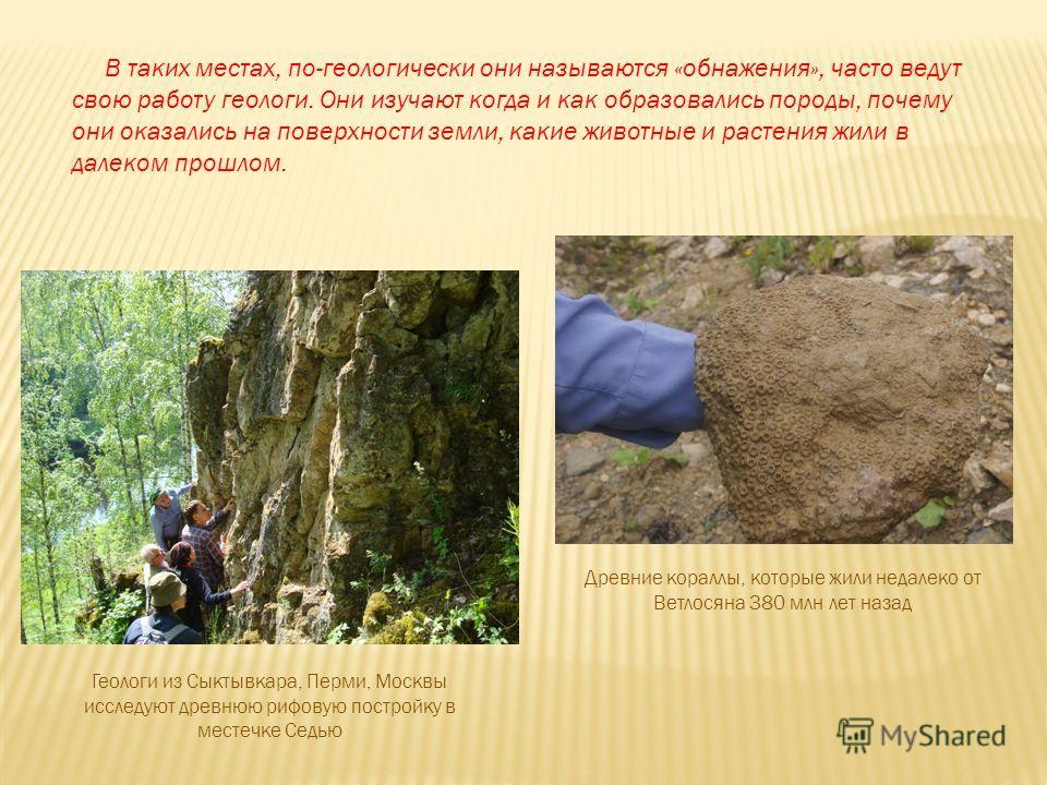 В таких местах, по-геологически они называются «обнажения», часто ведут свою работу геологи. Они изучают когда и как образовались породы, почему они оказались на поверхности земли, какие животные и растения жили в далеком прошлом. Геологи из Сыктывка