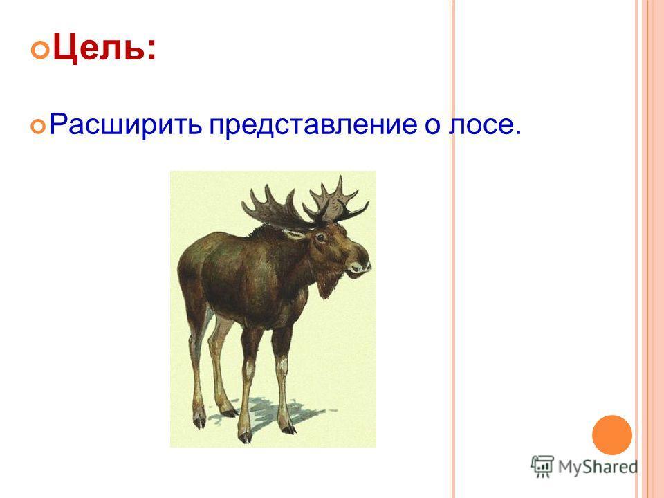 Цель: Расширить представление о лосе.