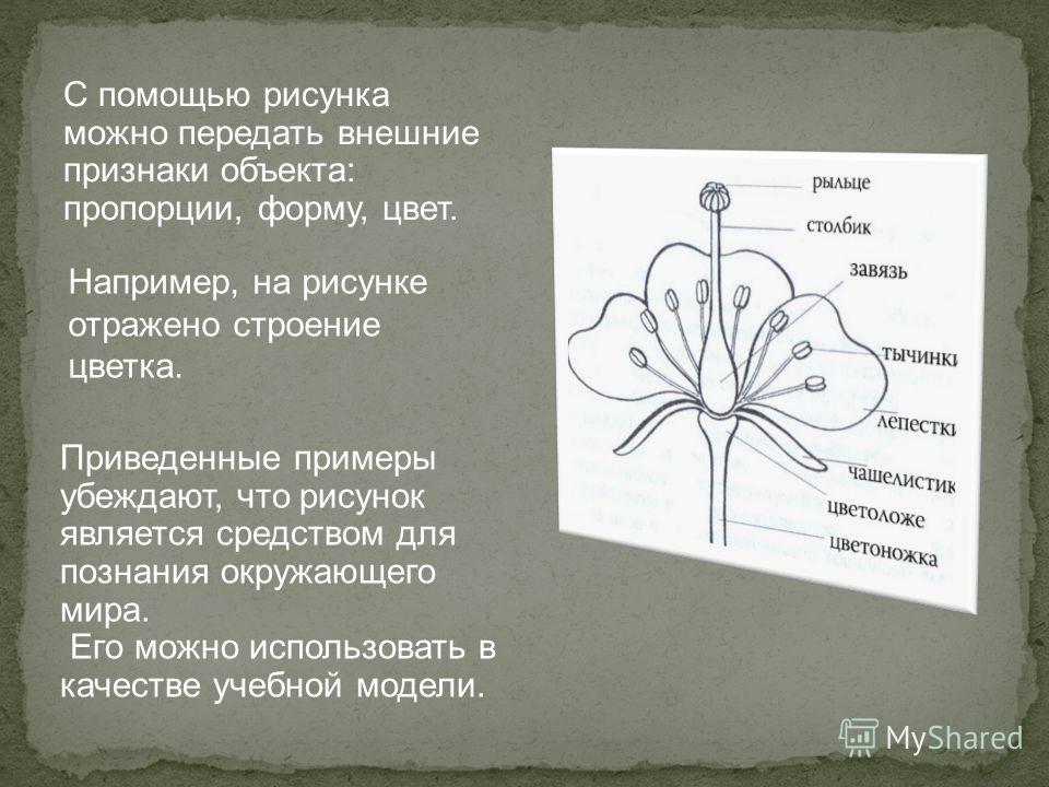 С помощью рисунка можно передать внешние признаки объекта: пропорции, форму, цвет. Приведенные примеры убеждают, что рисунок является средством для познания окружающего мира. Его можно использовать в качестве учебной модели. Например, на рисунке отра