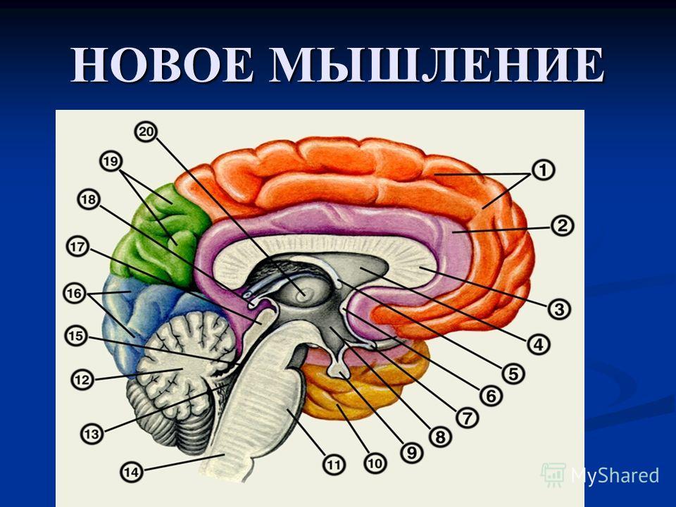 Вредные факторы при работе с ПК – Вредные факторы при работе с ПК – Психофизиологические * Нервно-психические перегрузки: –перенапряжение зрительного анализатора –умственное перенапряжение –эмоциональные перегрузки –монотонность труда * Физические пе