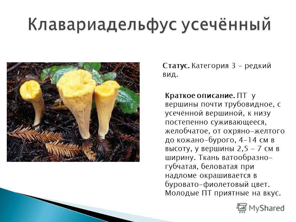 Статус. Категория 3 – редкий вид. Краткое описание. ПТ у вершины почти трубовидное, с усечённой вершиной, к низу постепенно суживающееся, желобчатое, от охряно-желтого до кожано-бурого, 4-14 см в высоту, у вершины 2,5 – 7 см в ширину. Ткань ватообраз