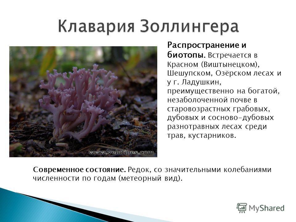 Распространение и биотопы. Встречается в Красном (Виштынецком), Шешупском, Озёрском лесах и у г. Ладушкин, преимущественно на богатой, незаболоченной почве в старовозрастных грабовых, дубовых и сосново-дубовых разнотравных лесах среди трав, кустарник