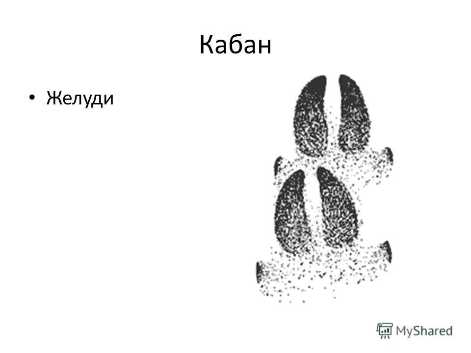Кабан Желуди