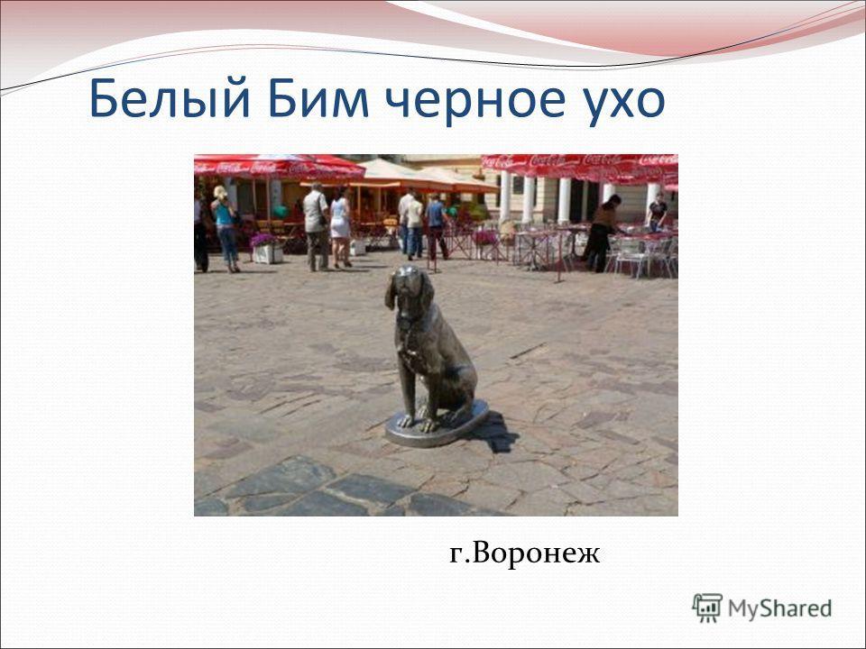 Белый Бим черное ухо г.Воронеж