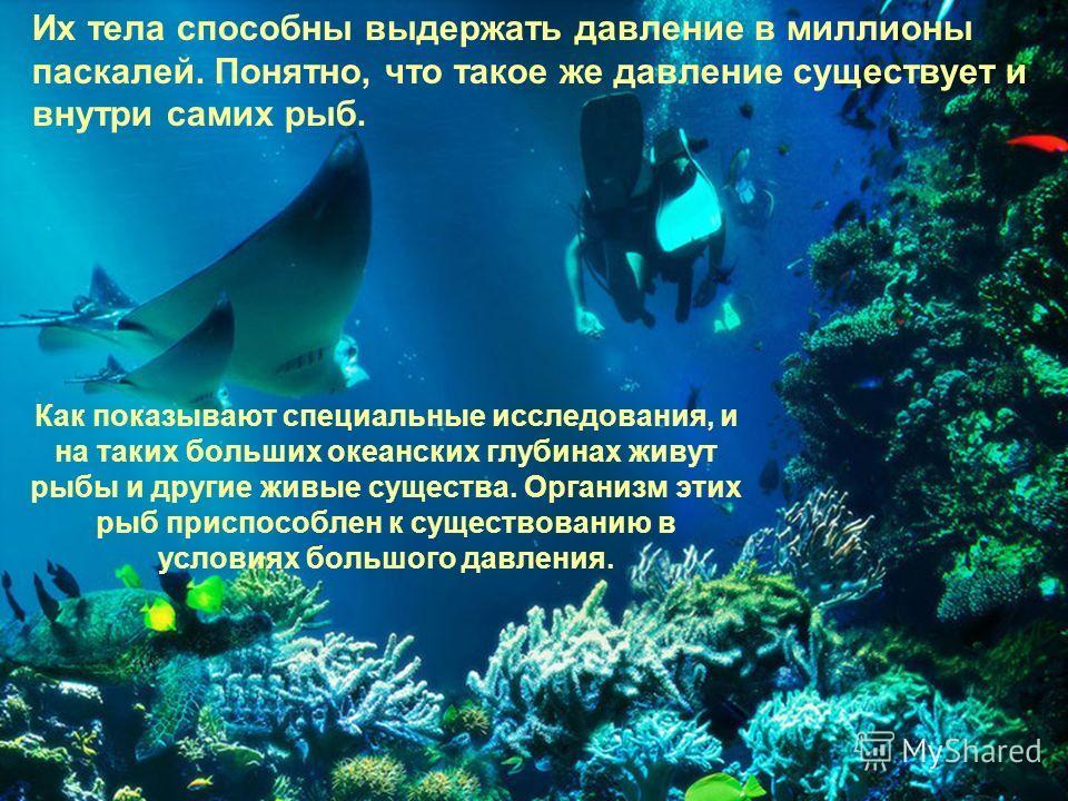 Как показывают специальные исследования, и на таких больших океанских глубинах живут рыбы и другие живые существа. Организм этих рыб приспособлен к существованию в условиях большого давления. Их тела способны выдержать давление в миллионы паскалей. П