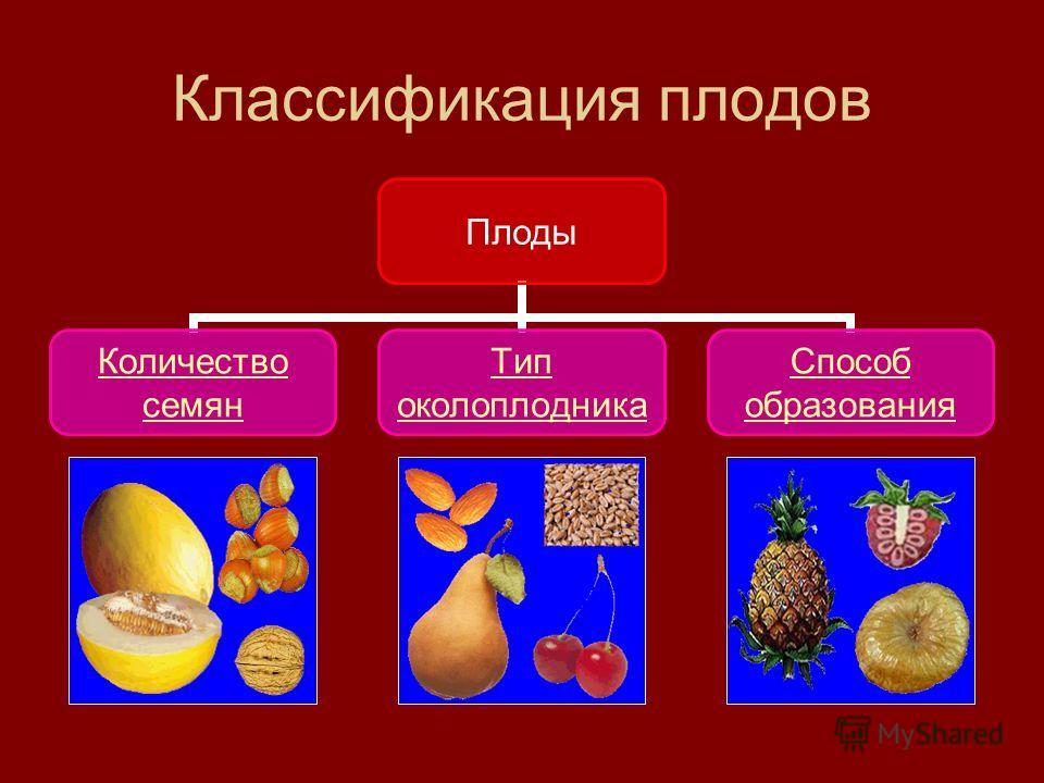 Классификация плодов Плоды Количество семян Тип околоплодника Способ образования