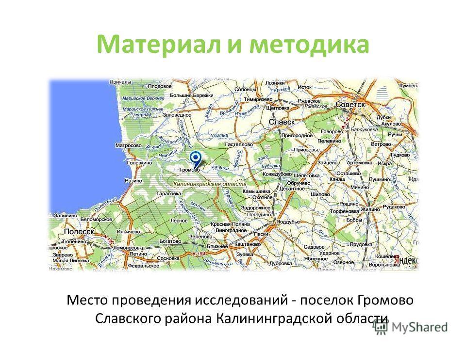 Материал и методика Место проведения исследований - поселок Громово Славского района Калининградской области