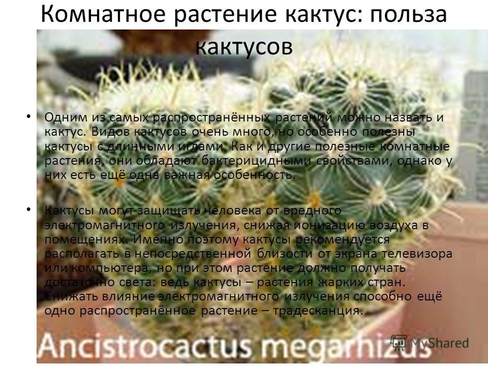 Комнатное растение кактус: польза кактусов Одним из самых распространённых растений можно назвать и кактус. Видов кактусов очень много, но особенно полезны кактусы с длинными иглами. Как и другие полезные комнатные растения, они обладают бактерицидны