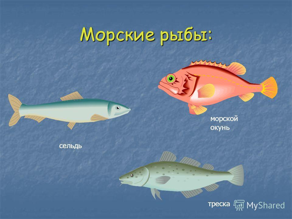 Морские рыбы: сельдь треска морской окунь