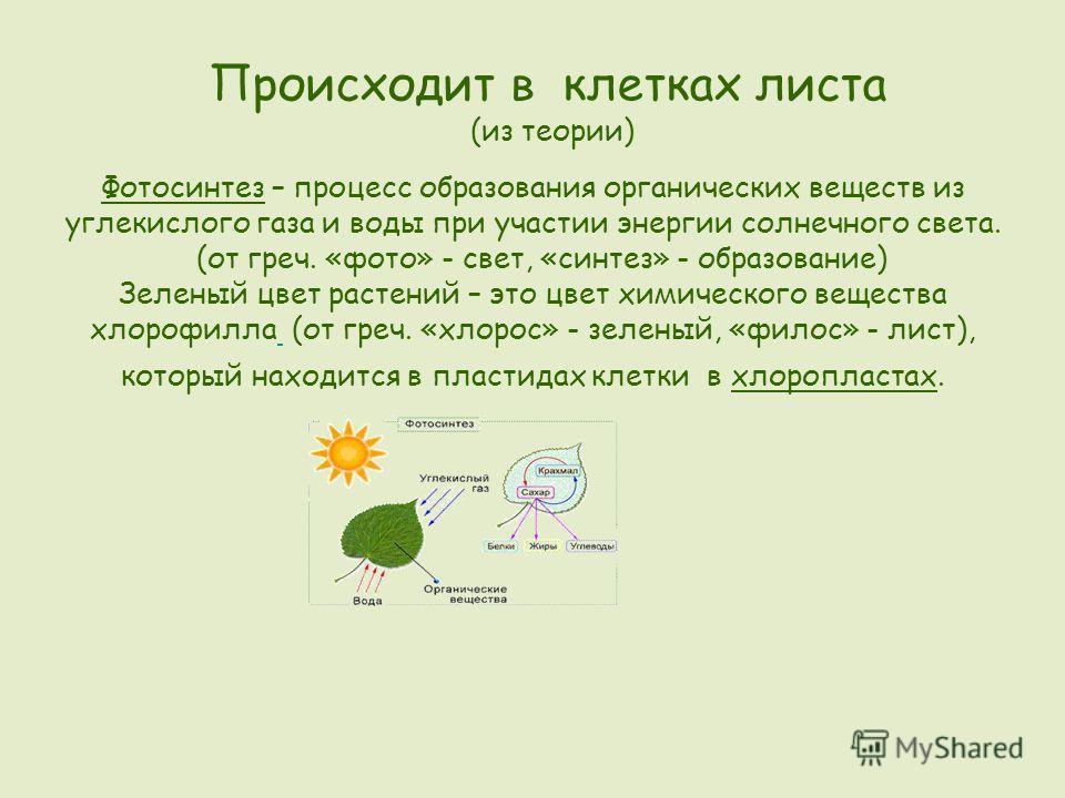 Происходит в клетках листа (из теории) Фотосинтез – процесс образования органических веществ из углекислого газа и воды при участии энергии солнечного света. (от греч. «фото» - свет, «синтез» - образование) Зеленый цвет растений – это цвет химическог