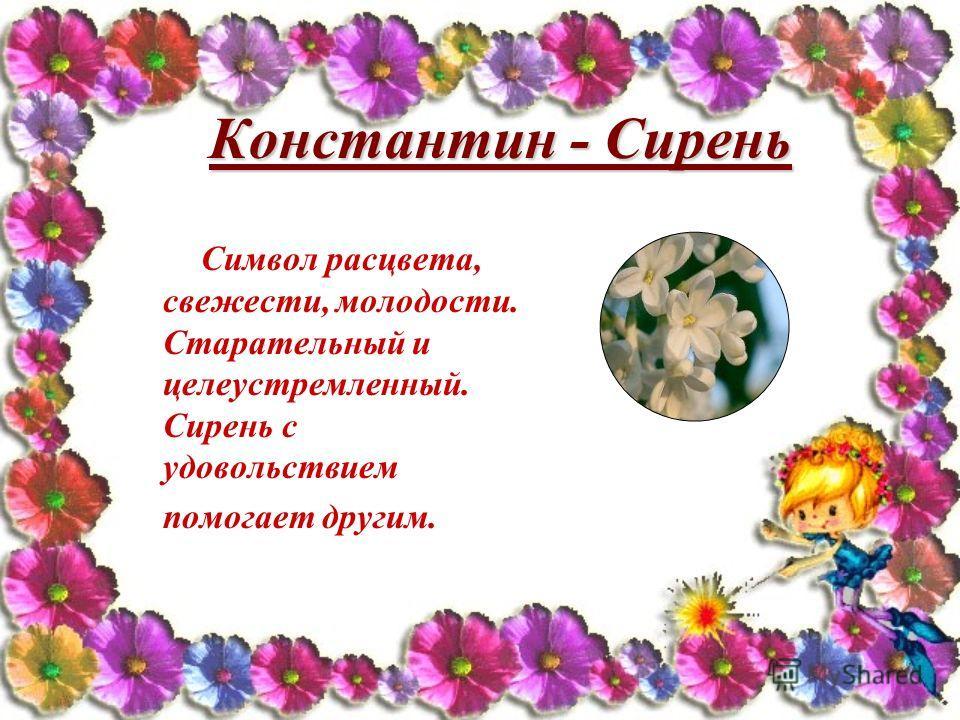 Константин - Сирень Символ расцвета, свежести, молодости. Старательный и целеустремленный. Сирень с удовольствием помогает другим.