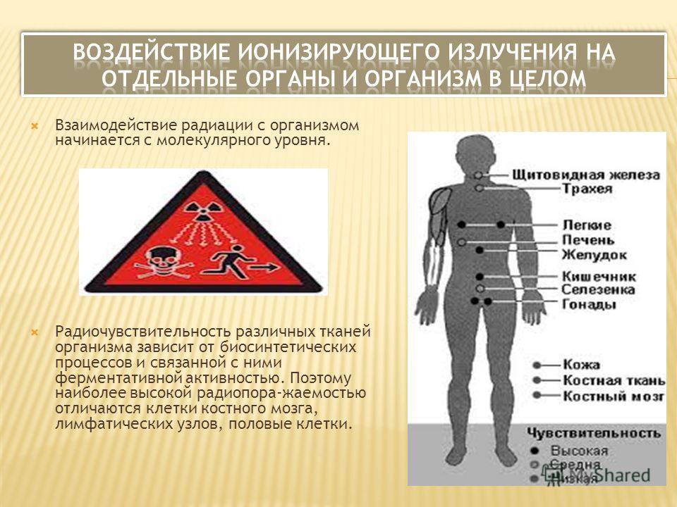 Взаимодействие радиации с организмом начинается с молекулярного уровня. Радиочувствительность различных тканей организма зависит от биосинтетических процессов и связанной с ними ферментативной активностью. Поэтому наиболее высокой радиопора-жаемостью