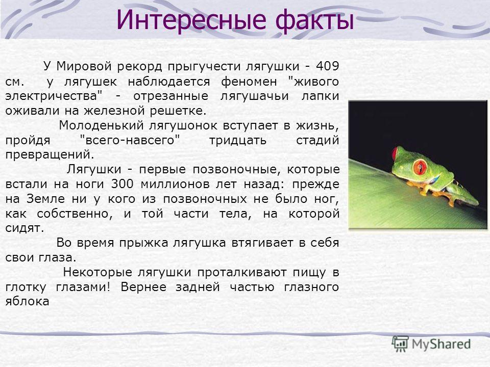 Интересные факты У Мировой рекорд прыгучести лягушки - 409 см. у лягушек наблюдается феномен