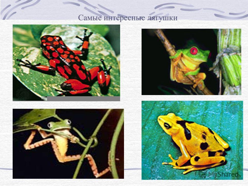 Самые интересные лягушки