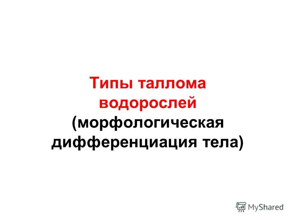 Типы таллома водорослей (морфологическая дифференциация тела)