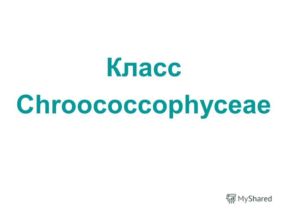 Класс Chroococcophyceae