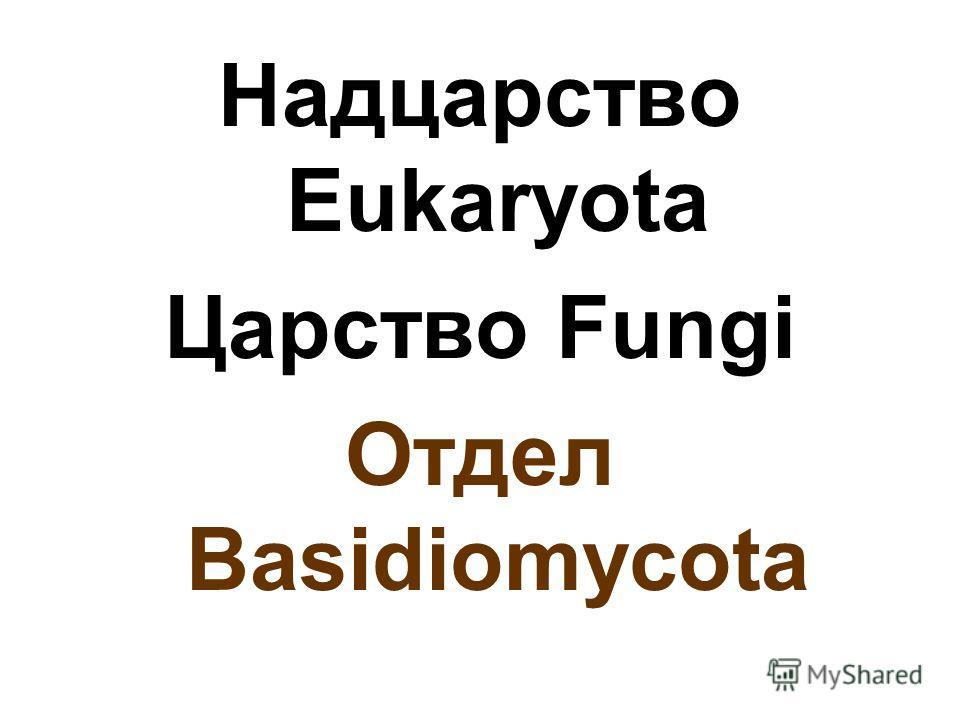 Надцарство Eukaryota Царство Fungi Отдел Basidiomycota