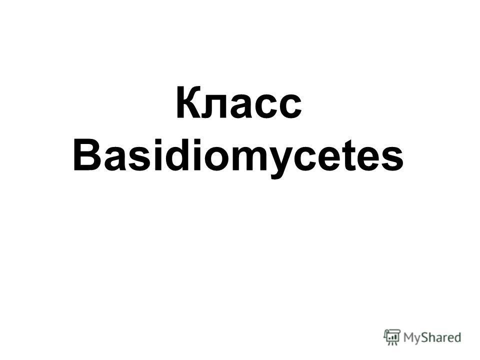 Класс Basidiomycetes