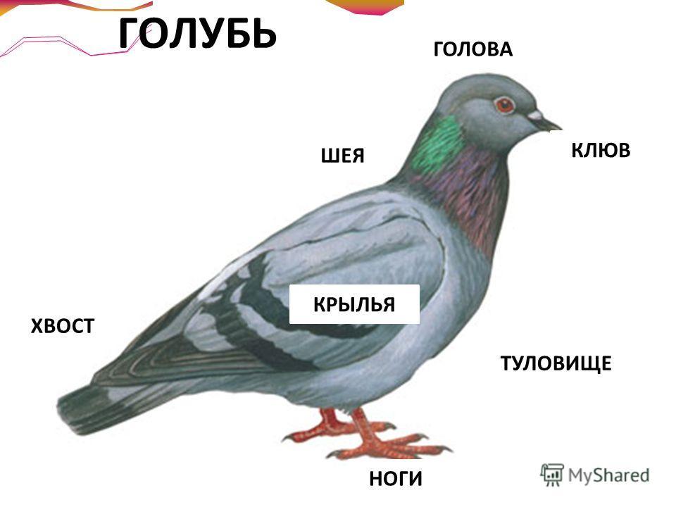 Давайте мы с вами руками помашем, И что-нибудь птичье давайте мы скажем… А вдруг это будет? А вдруг мы взлетим? Давайте попробуем, Что мы сидим?!