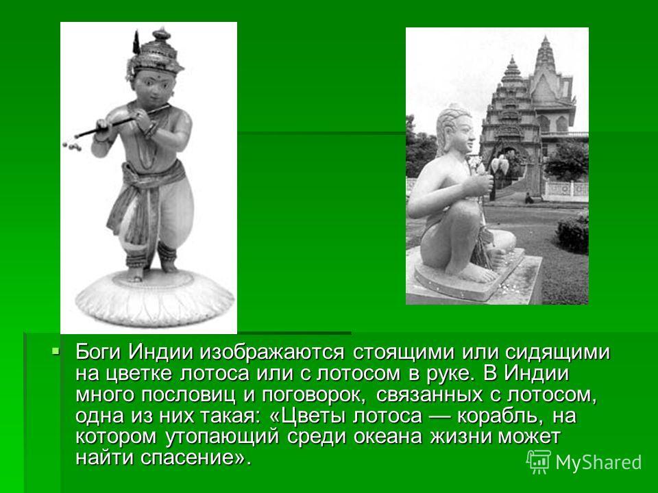Боги Индии изображаются стоящими или сидящими на цветке лотоса или с лотосом в руке. В Индии много пословиц и поговорок, связанных с лотосом, одна из них такая: «Цветы лотоса корабль, на котором утопающий среди океана жизни может найти спасение». Бог