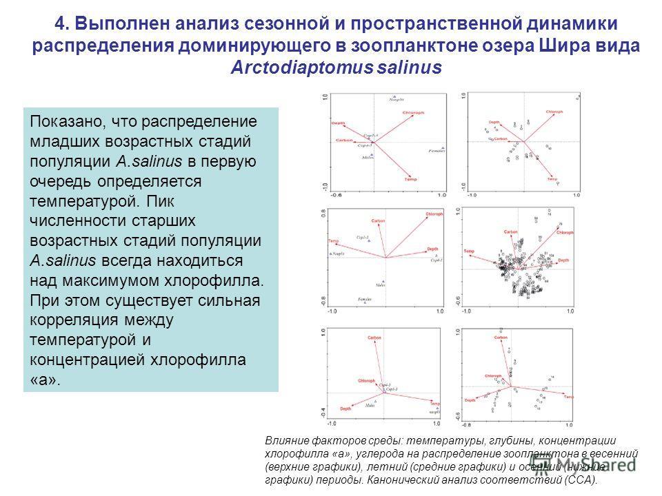 Показано, что распределение младших возрастных стадий популяции A.salinus в первую очередь определяется температурой. Пик численности старших возрастных стадий популяции A.salinus всегда находиться над максимумом хлорофилла. При этом существует сильн