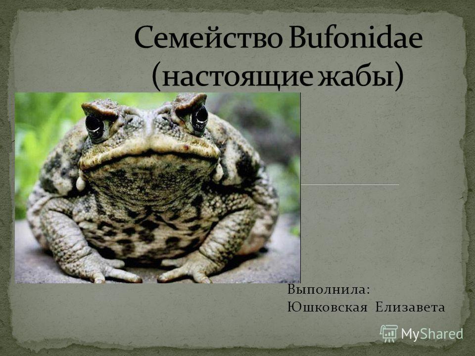 Выполнила: Юшковская Елизавета