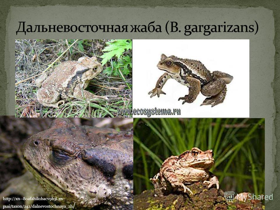 http://xn--80afahik1bacv9b3i.xn- p1ai/taxon/242/dalnevostochnaya_zh /