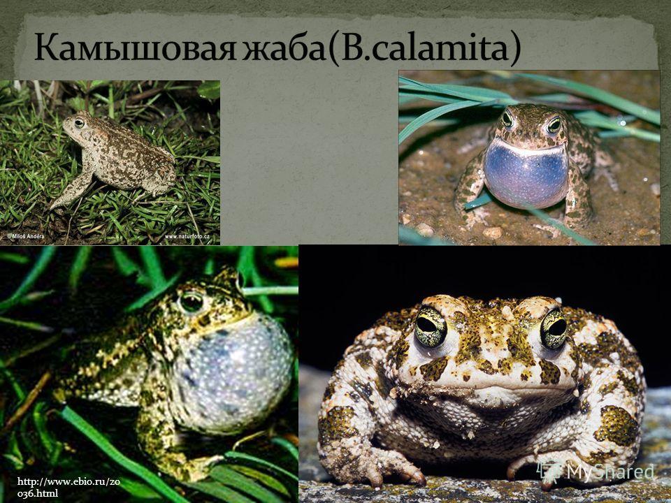 http://www.ebio.ru/zo o36.html
