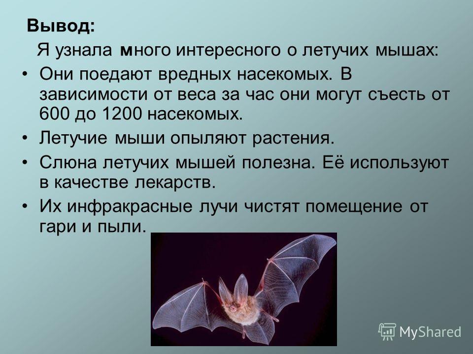 Вывод: Я узнала много интересного о летучих мышах: Они поедают вредных насекомых. В зависимости от веса за час они могут съесть от 600 до 1200 насекомых. Летучие мыши опыляют растения. Слюна летучих мышей полезна. Её используют в качестве лекарств. И