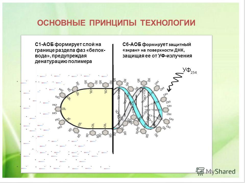 ОСНОВНЫЕ ПРИНЦИПЫ ТЕХНОЛОГИИ С1-АОБ формирует слой на границе раздела фаз «белок- вода», предупреждая денатурацию полимера С6-АОБ ф ормир ует защитн ый « экран » на поверхности ДНК, защищая ее от УФ-излучения + - + - + - + - + - + - + - + - + - + - +