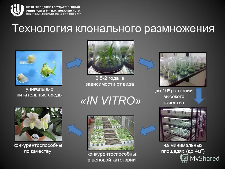 Технология клонального размножения уникальные питательные среды до 10 6 растений высокого качества на минимальных площадях (до 4м 2 ) «IN VITRO» 0,5-2 года в зависимости от вида конкурентоспособны в ценовой категории конкурентоспособны по качеству