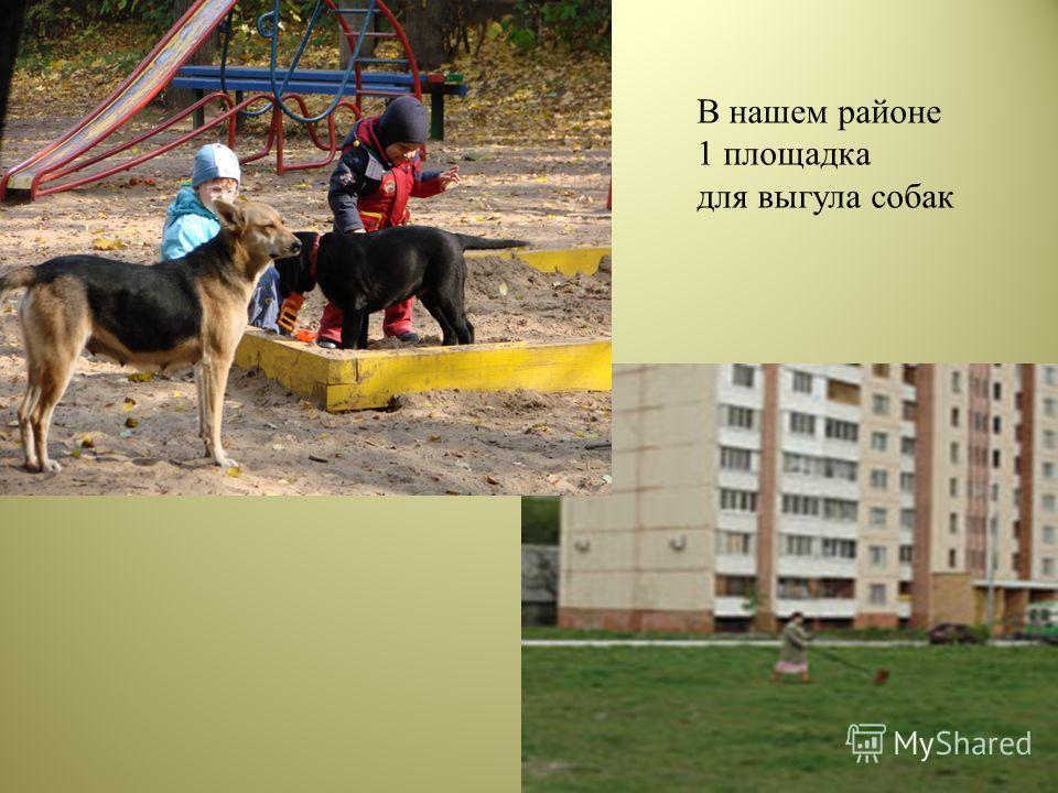 В нашем районе 1 площадка для выгула собак
