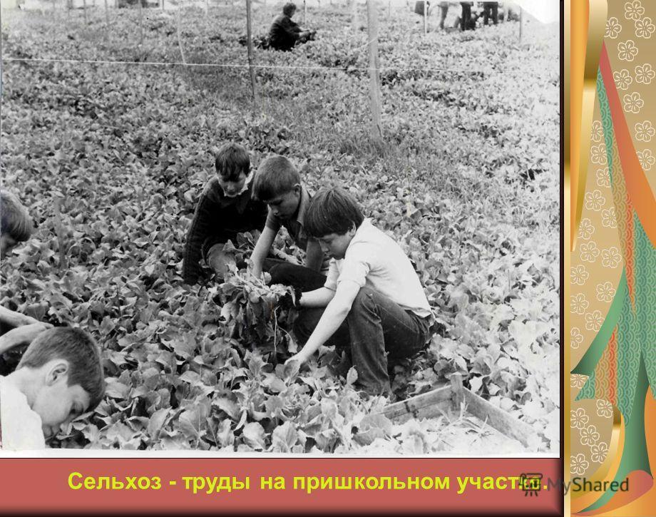 Сельхоз - труды на пришкольном участке.