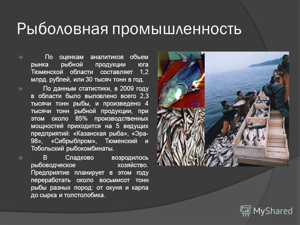 Рыболовная промышленность По оценкам аналитиков объем рынка рыбной продукции юга Тюменской области составляет 1,2 млрд. рублей, или 30 тысяч тонн в год. По данным статистики, в 2009 году в области было выловлено всего 2,3 тысячи тонн рыбы, и произвед