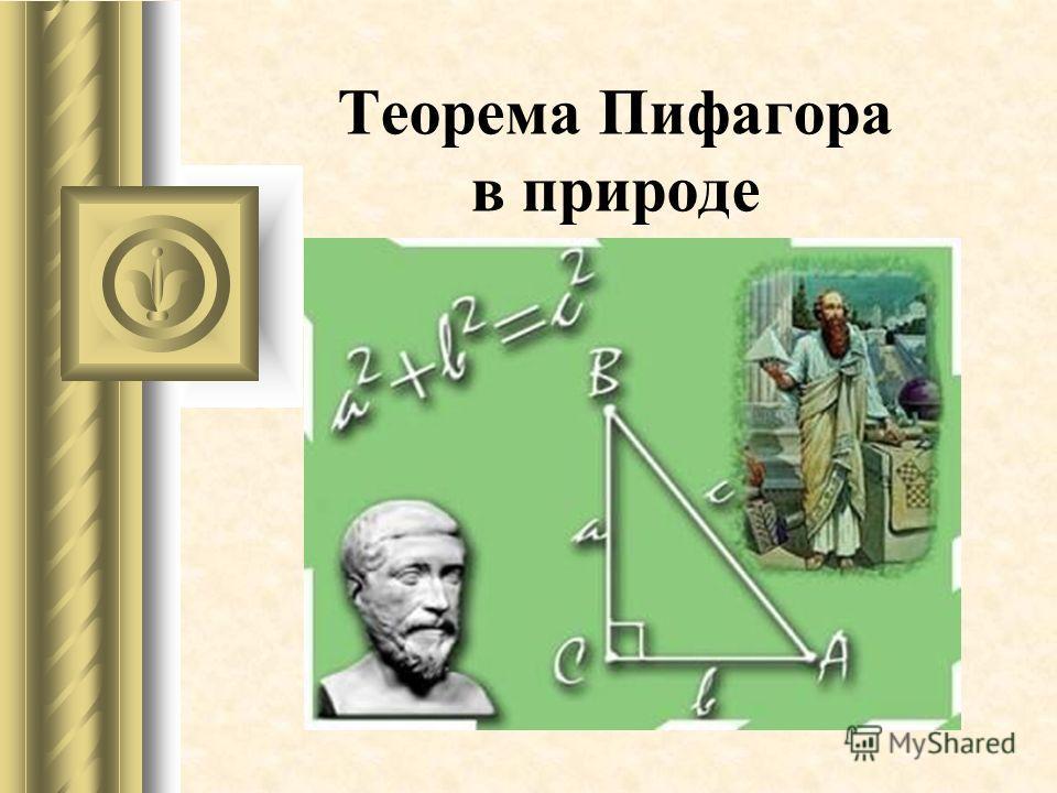 Теорема Пифагора в природе