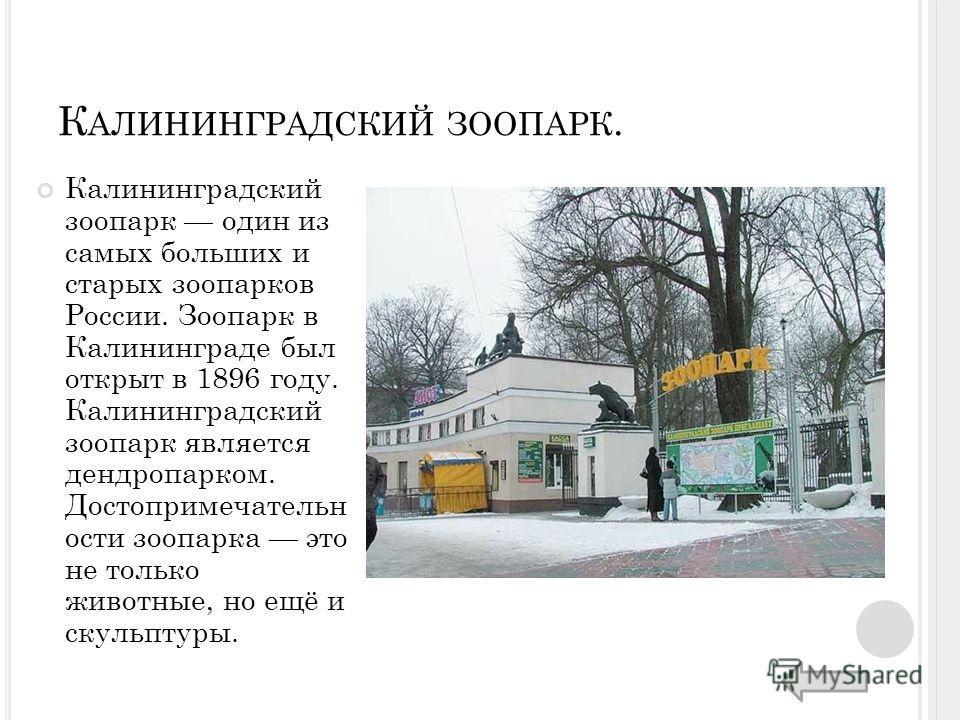 К АЛИНИНГРАДСКИЙ ЗООПАРК. Калининградский зоопарк один из самых больших и старых зоопарков России. Зоопарк в Калининграде был открыт в 1896 году. Калининградский зоопарк является дендропарком. Достопримечательн ости зоопарка это не только животные, н
