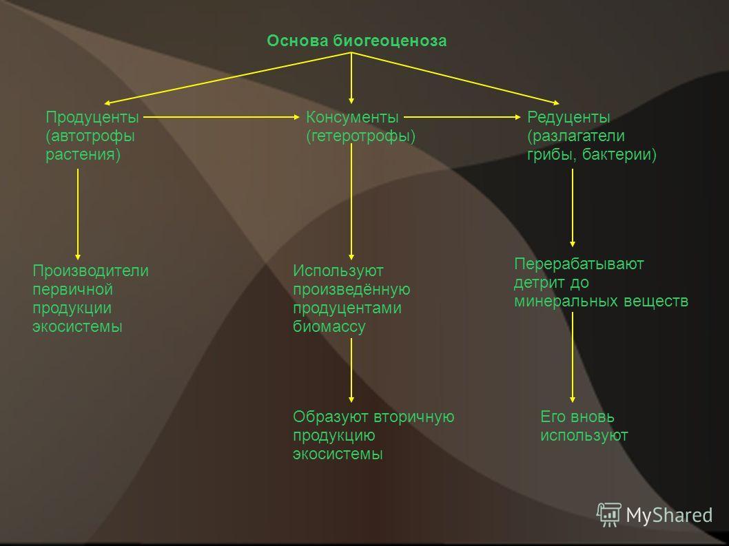 Основа биогеоценоза Продуценты (автотрофы растения) Консументы (гетеротрофы) Редуценты (разлагатели грибы, бактерии) Производители первичной продукции экосистемы Используют произведённую продуцентами биомассу Перерабатывают детрит до минеральных веще