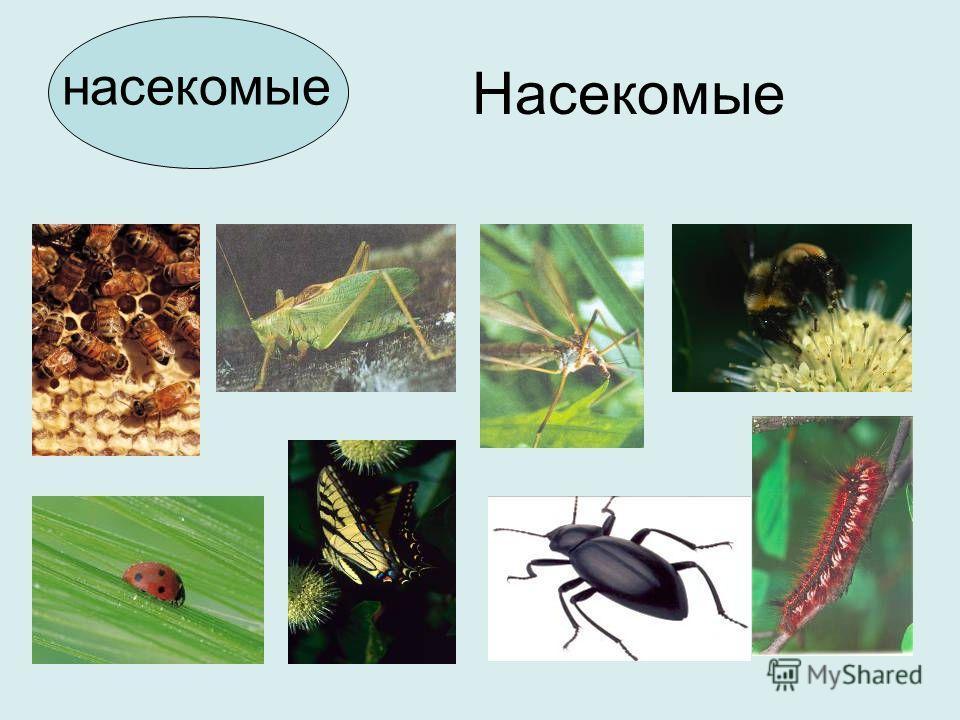 Насекомые насекомые